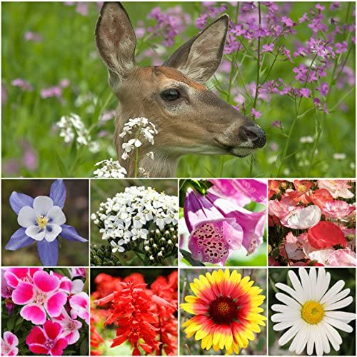 Seed Needs Bulk Deer Resistant Wildflower Seeds